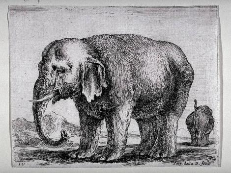 lelephant
